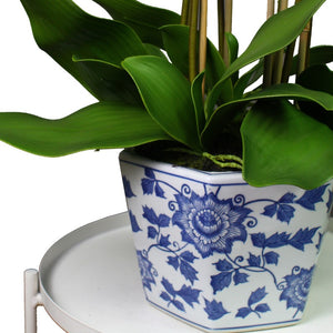 Orchid in Blue & White Hex Pot 77cm
