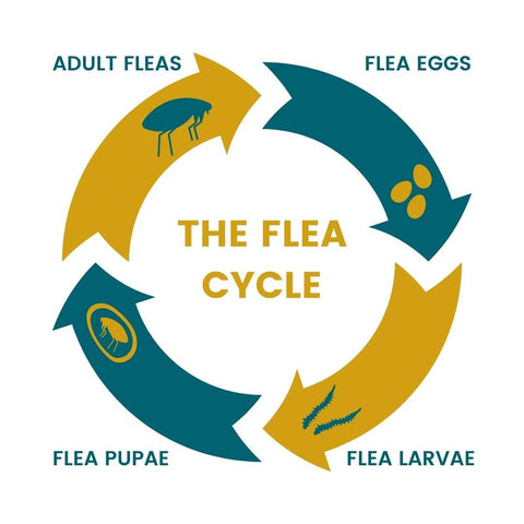 Bone Idol | Guide: Fleas, Life Cycle, Treatments and Prevention
