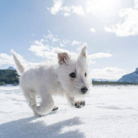 Top 10 Winter Safety Tips for Dogs | Snow Ice | Rock Salt Antifreeze