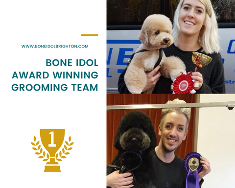 Award Winning Dog Grooming Team