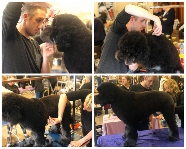 Award Winning Grooming Bone Idol Brighton