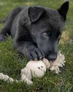 Black Dog wih Smug Mutts Knot Put Natural Dog Toy, Hemp Rope Beech Ball Available at Bone Idol