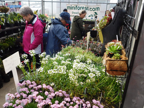 Miniature Blooming Perennials