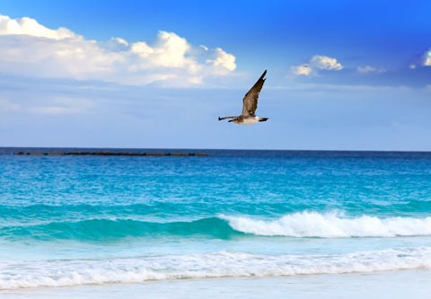 Soothing Ocean Sounds Decrease Stress