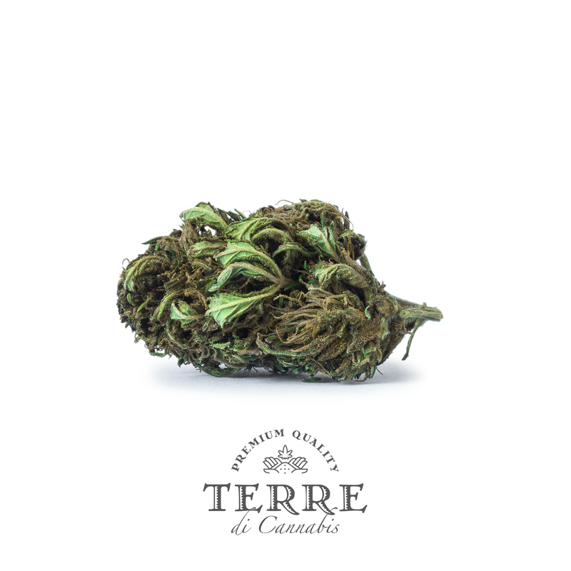 products/TERRE_BRIOSA_MOCKUP_SOLOFLOWER.png