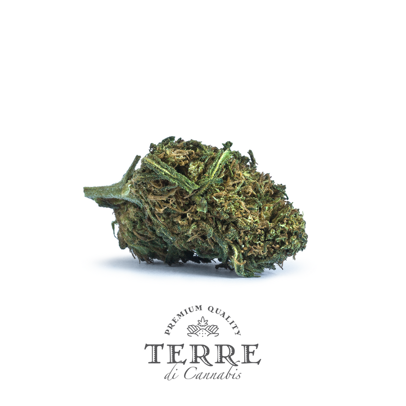 products/TERRE_FATALE_FLOWER_2021.png