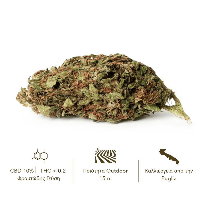 products/TERRE_di_CANNABIS_box_flower_SANTA_GR1.png