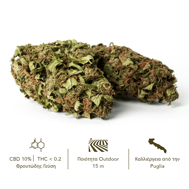 products/TERRE_di_CANNABIS_box_flower_SANTA_GR2.png