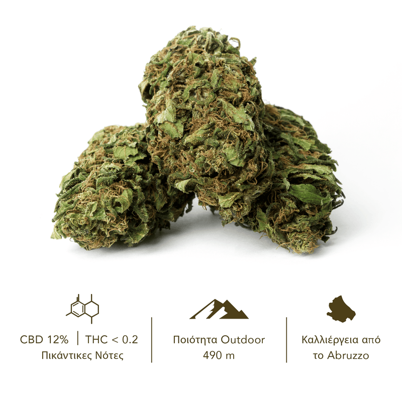 products/TERRE_di_CANNABIS_box_flower_SANTA_GR3.png