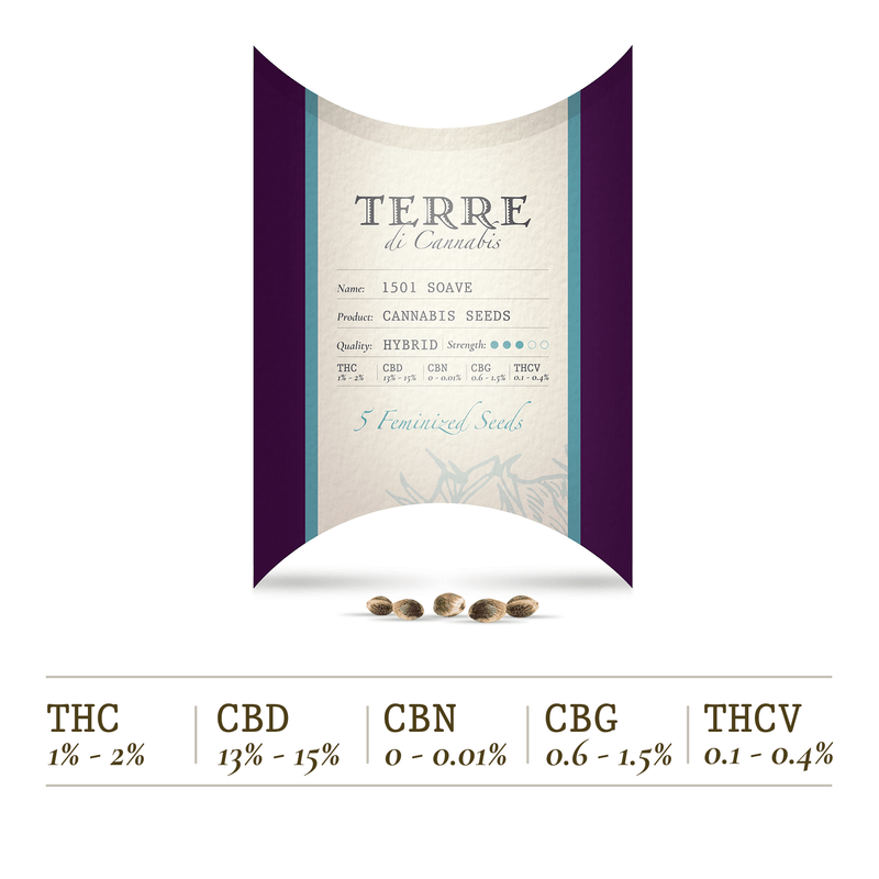 products/TERRE_di_CANNABIS_seeds_SOAVE.png