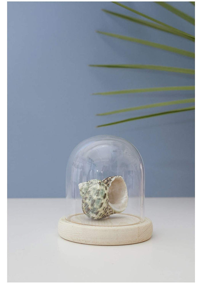 Small Bell Jar With Wood Base