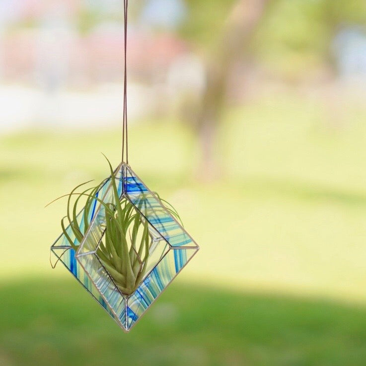 [NEW] Air Plants Hanging - Blue & Clear