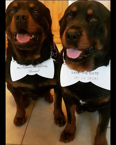 Personalised save the date wedding dog sign