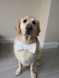 my humans are getting married dog bow