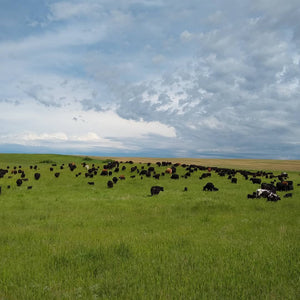 Brown's Ranch Private Tours