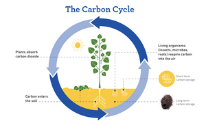 Healthy Soils to Cool the Planet Guide