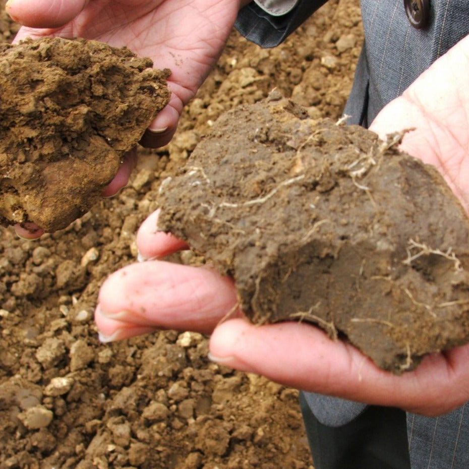 Article - Soil as Carbon Storehouse: New Weapon in Climate Fight?