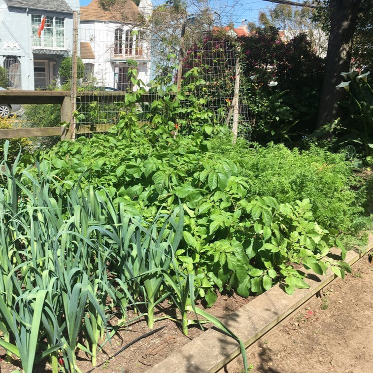 Article - Gardening: Good for you, Good for the Earth