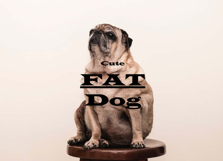 Canine Obesity is a Global Epidemic