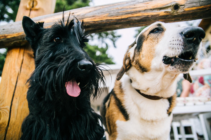 8 Tips for Socialising Your Dog