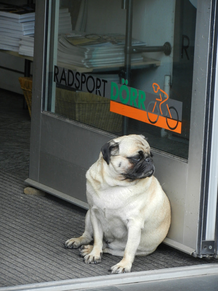 Canine Obesity: No Excuse!