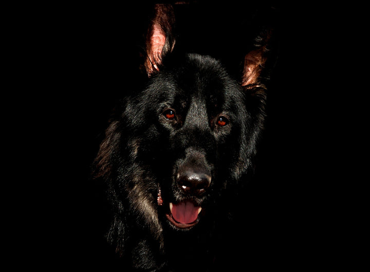 "The German Shepherd Dog: Your ""Owner's Manual"""