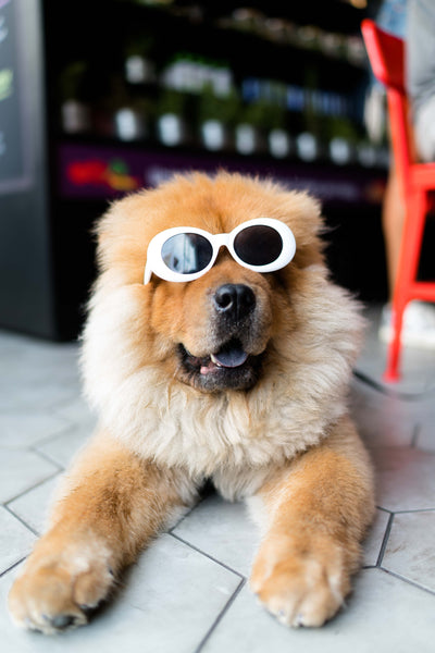 A happy stylish dog