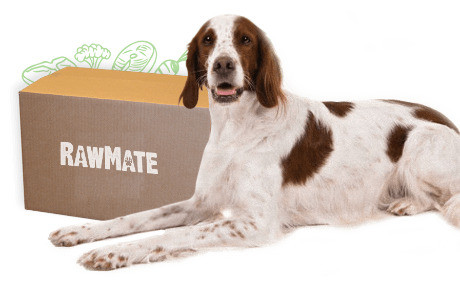rawmate-dog