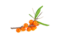 Sea Buckthorn Carrier Oil