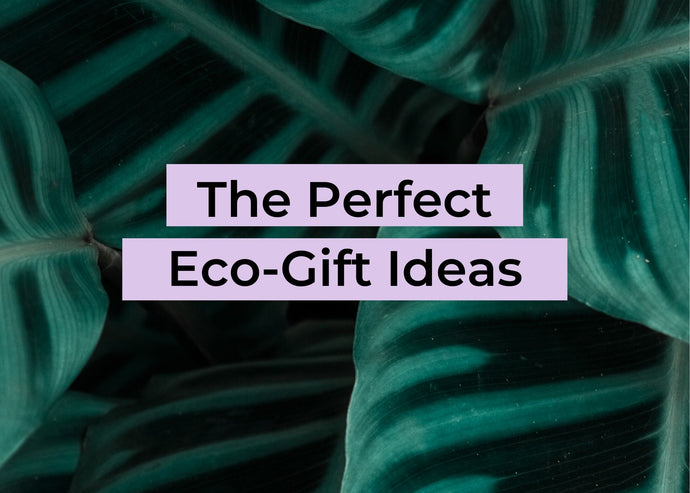 The Perfect Eco-Gift Ideas