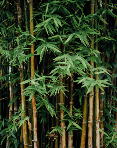 Bamboo Plant helps plastic free living