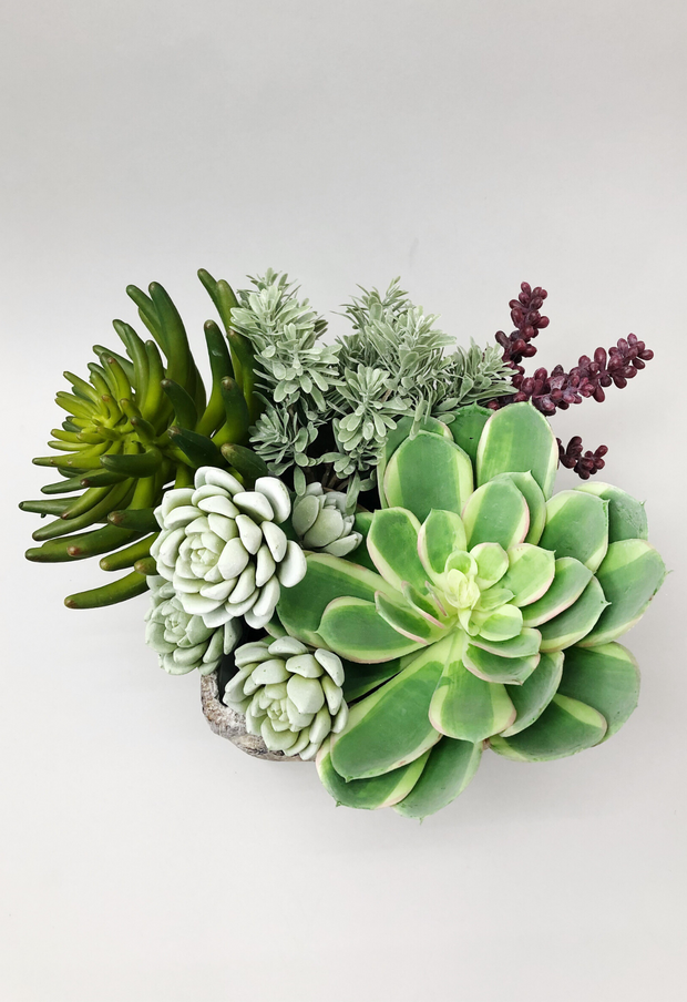 Green with Envy Succulent Arrangement