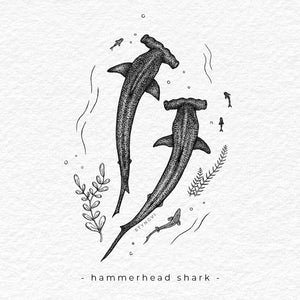 Hammerhead Shark - Limited Edition A4 Print - Signed and numbered