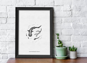 Bonnethead - Limited Edition A4 Print - Signed and numbered