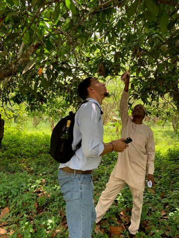 Zach getting educated by Dr. Olubamiwa on kolanut cultivation
