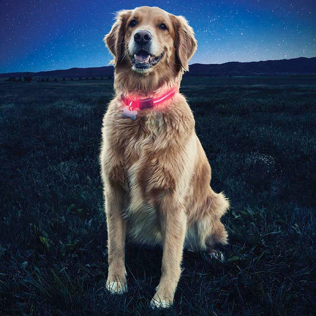 Nite Ize Nite Dawg® LED Dog Collar | Reflective | Glow | Flash Illumination