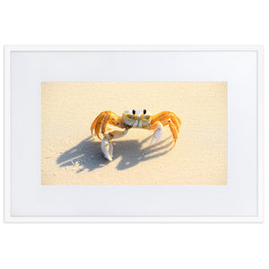 Ghost Crab (Framed Poster With Mat)