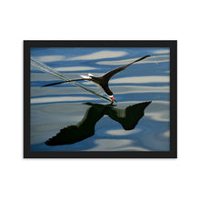 Load image into Gallery viewer, Black Skimmer (Framed Poster)
