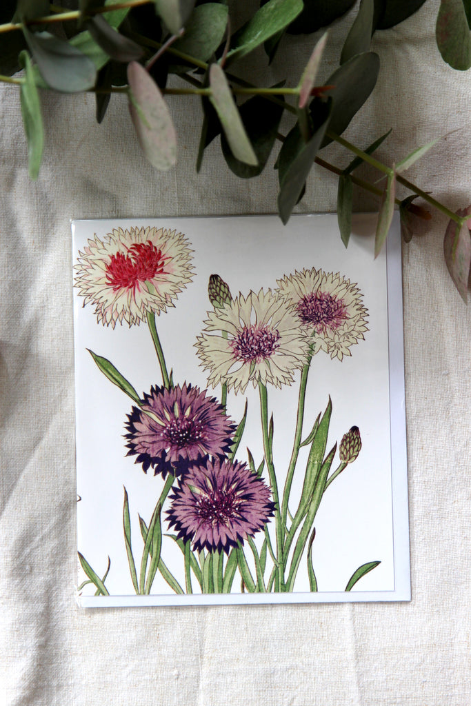 Natural History Museum Cornflower Card