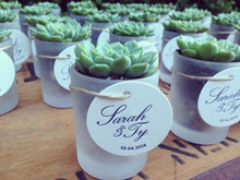 Load image into Gallery viewer, DIY Succulent Bomboniere/ Favors in Frosted Glass Vessels
