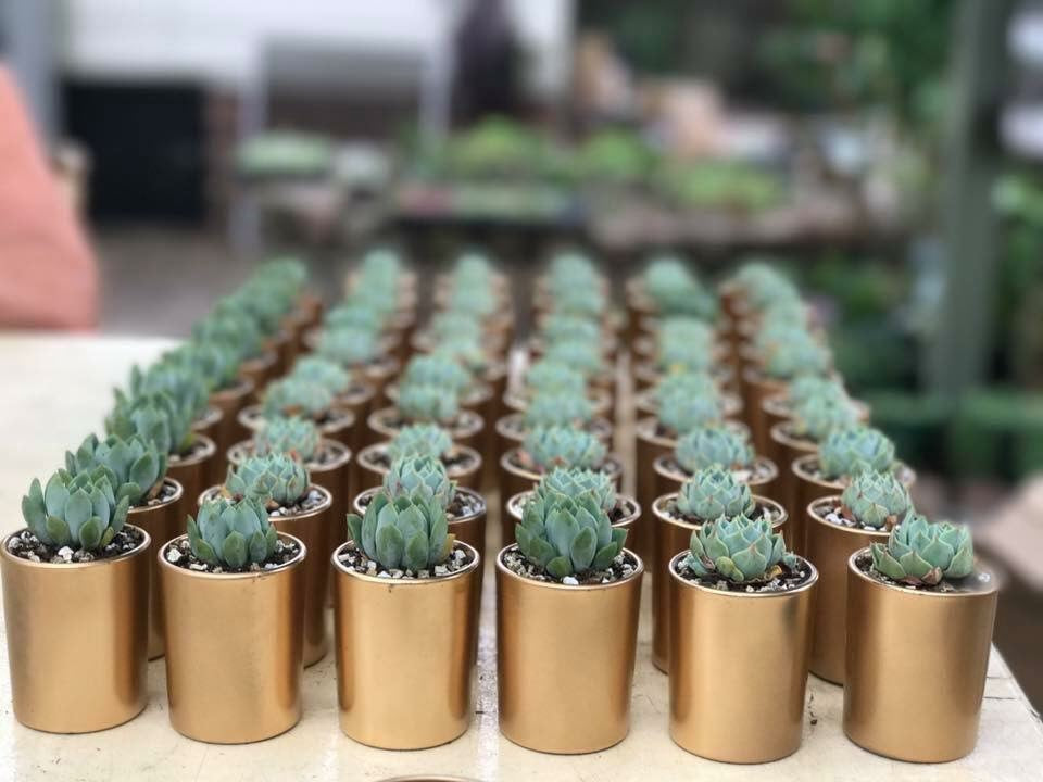 Succulent Bomboniere/ Favors in Metallic Glass Vessels