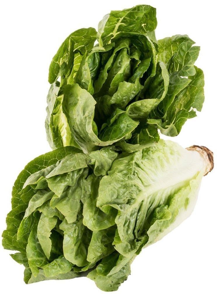 Lettuce Romaine (350grams) - Organics.ph