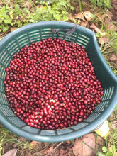Load image into Gallery viewer, Nicaragua Santa Rita - Direct Trade (Washed)