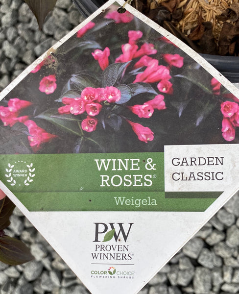 WEIGELA, WINE & ROSES PW
