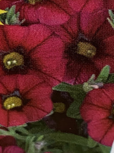 CALIBRACHOA, CALLIE BURGUNDY