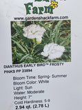 DIANTHUS, EARLY BIRD FROSTY