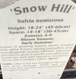 SALVIA, SNOW HILL