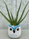 POTTED SUCCULENT, SMALL OWL