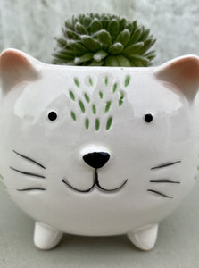 POTTED SUCCULENT, SMALL CAT