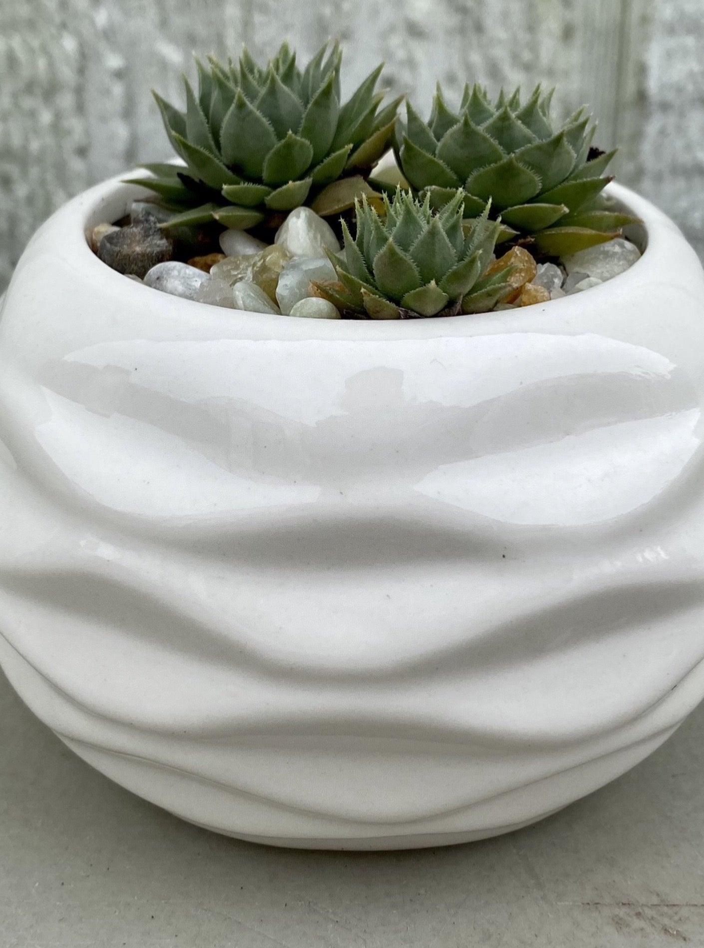 POTTED SUCCULENT, WAVY SPHERE